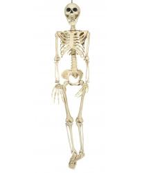 Скелет (90 см)