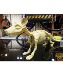 Скелет крысы