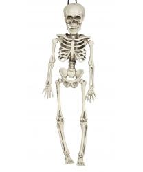 Скелет (40 см)
