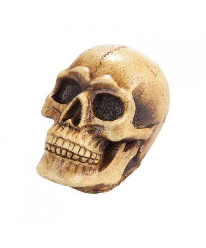 Латексный череп 10х13 см