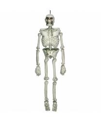 Скелет (137см)