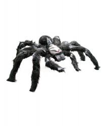 Черный паук с мохнатыми лапками