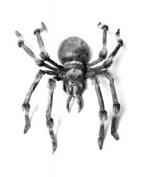 Огромный паук-монстр