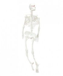 Скелет (32см)