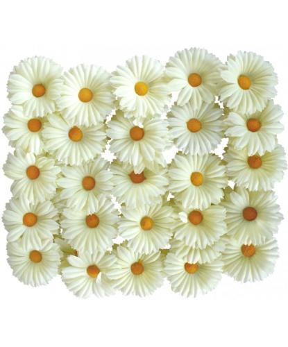 Декоративные цветы Маргаритки