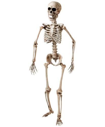 Скелет (160 см)