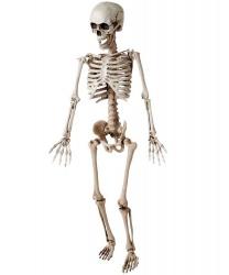 Декоративный скелет (120 см)