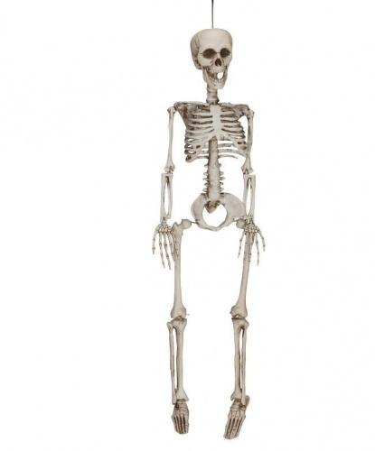 Скелет (60 см)