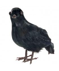 Черная птица - Другие аксессуары, арт: 7898