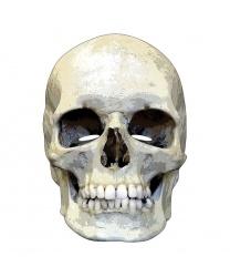 Бумажная маска 2D Череп