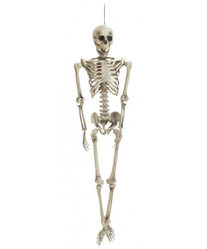 Скелет (153 см)