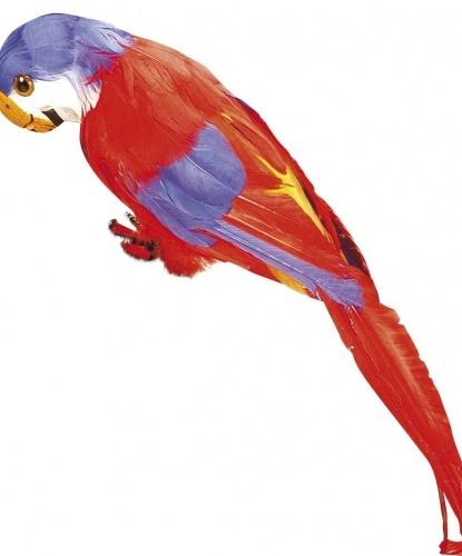 Пиратский попугай. (Италия)